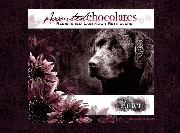Assorted Chocolates Registered Labrador Retrievers